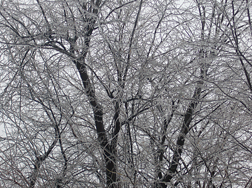 Ice in the trees. More winter.