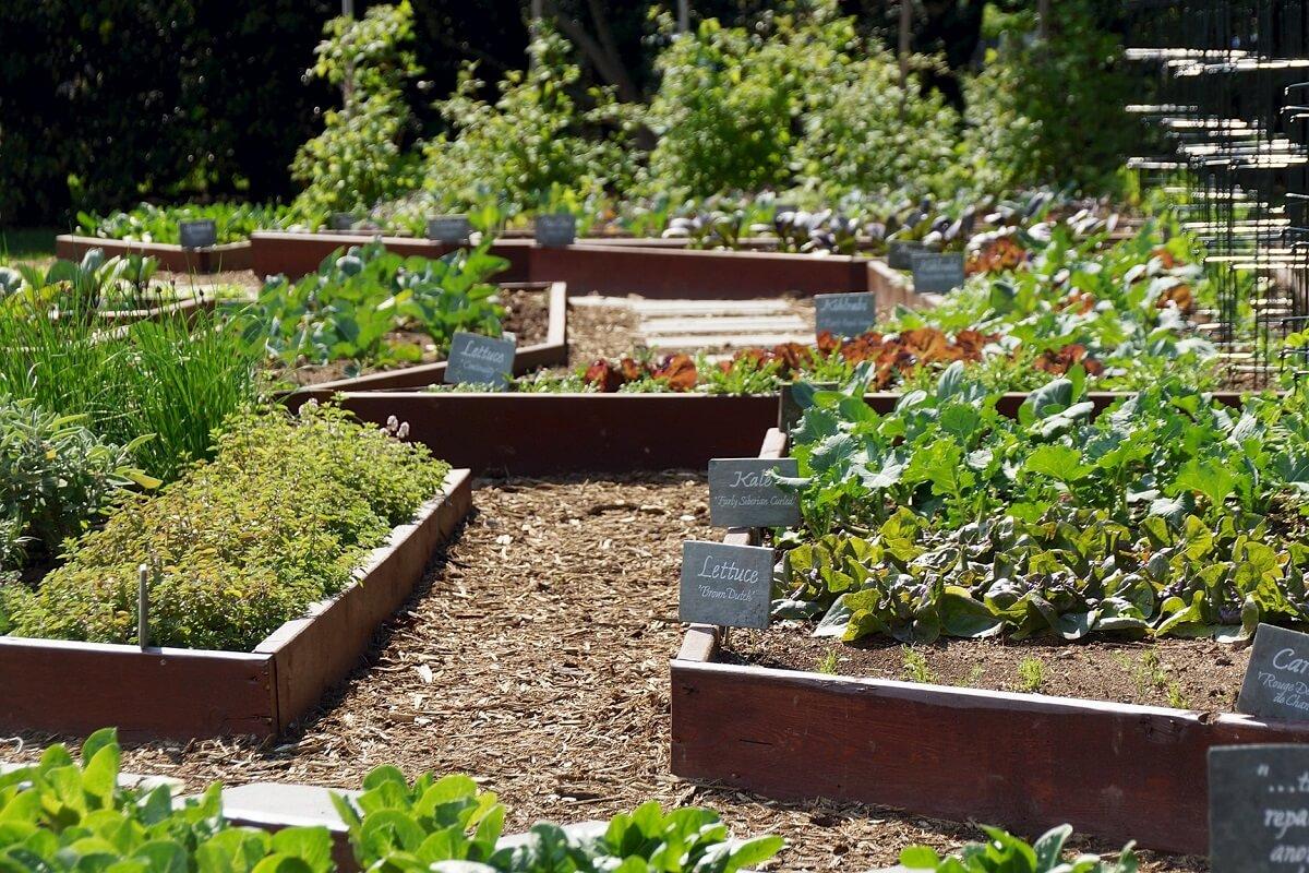 white house garden
