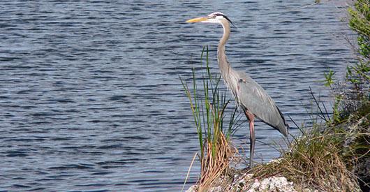 Obama renews Everglades restoration