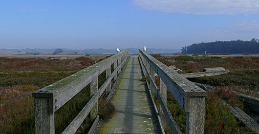 Elkhorn Slough to be restored under the Recovery Act.