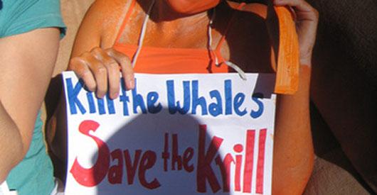 NOAA bans krill fishing off the West Coast
