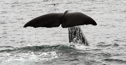 Whales and dolphins exhibit characteristics of personhood