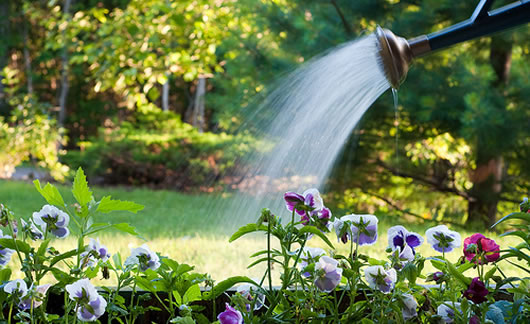 Using a watering can in the garden can conserve water