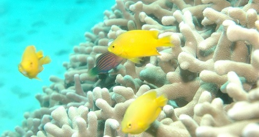 Coral reefs may be more resilient than science had originally thought