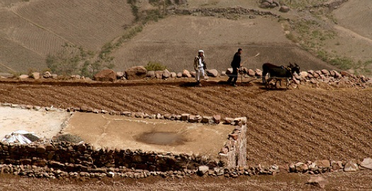 Effectively managing water is essential in Middle Eastern farms like this one in Yemen