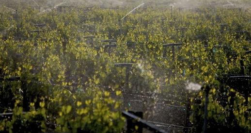 The Imagine H2O Water Innovation Winner could revolutionize vineyard irrigation