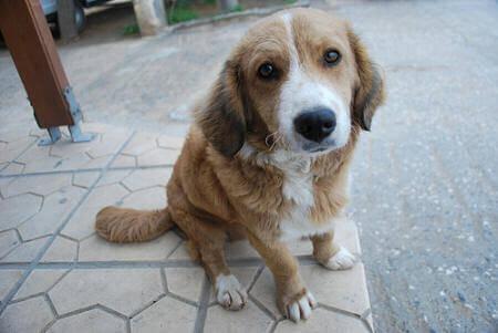 Stray Companion Animals Dog Bites  Non Reportable