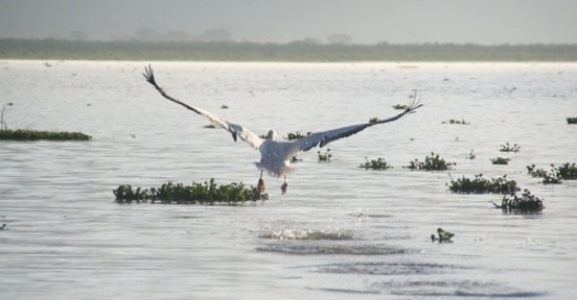 Kenya's Lake Naivasha has shrunk to half its former 81 square miles in a decade.