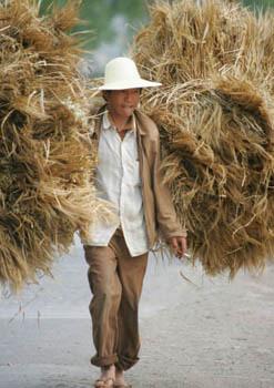 wheat farmer china