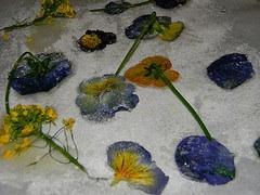 crystallizing pansies