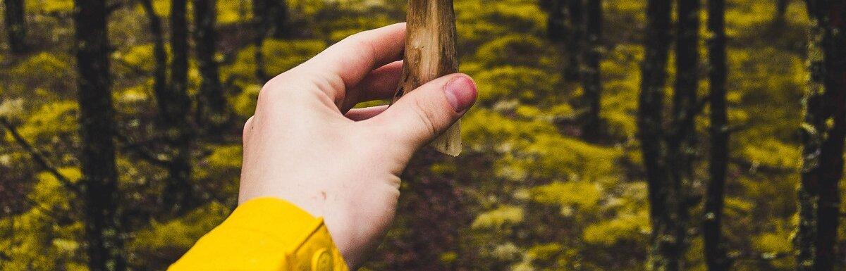 person holding mushroom