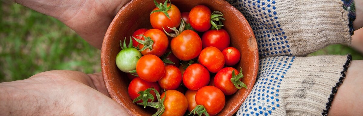 trading tomatoes