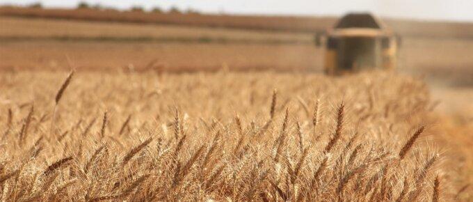 wheat field plow