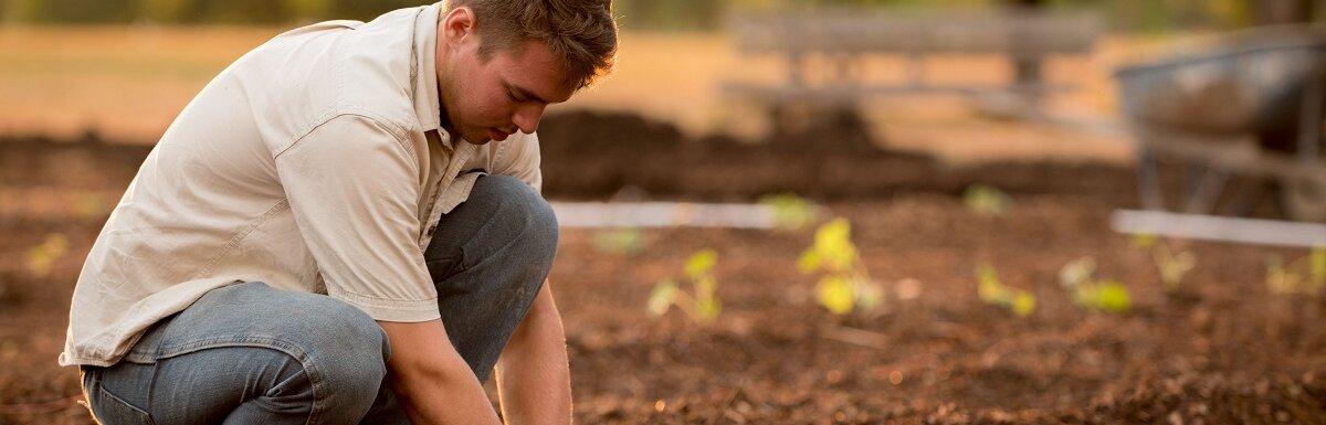 man gardening pumpkins