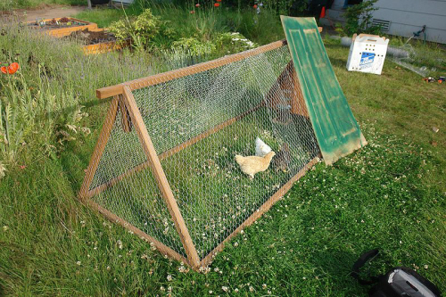 a diy chicken tractor