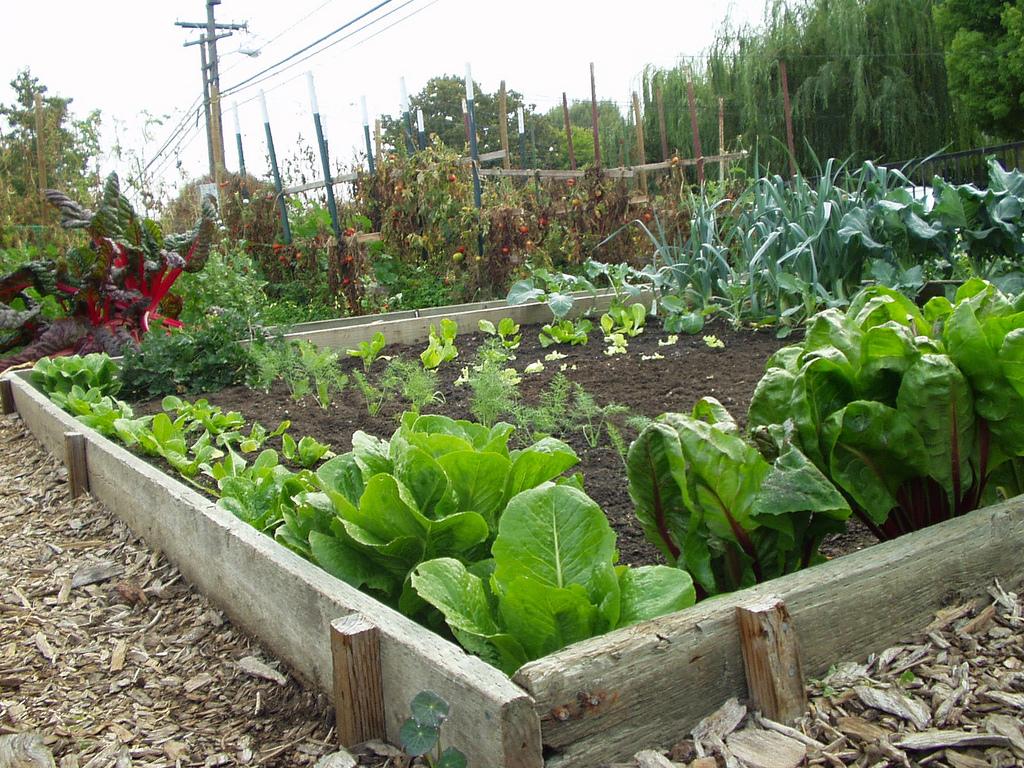 Public Garden Plot