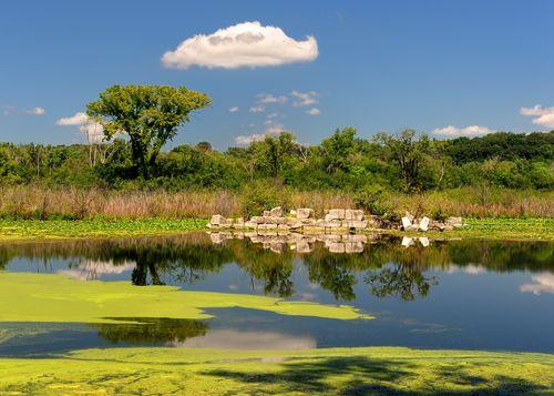 Algae in a pond