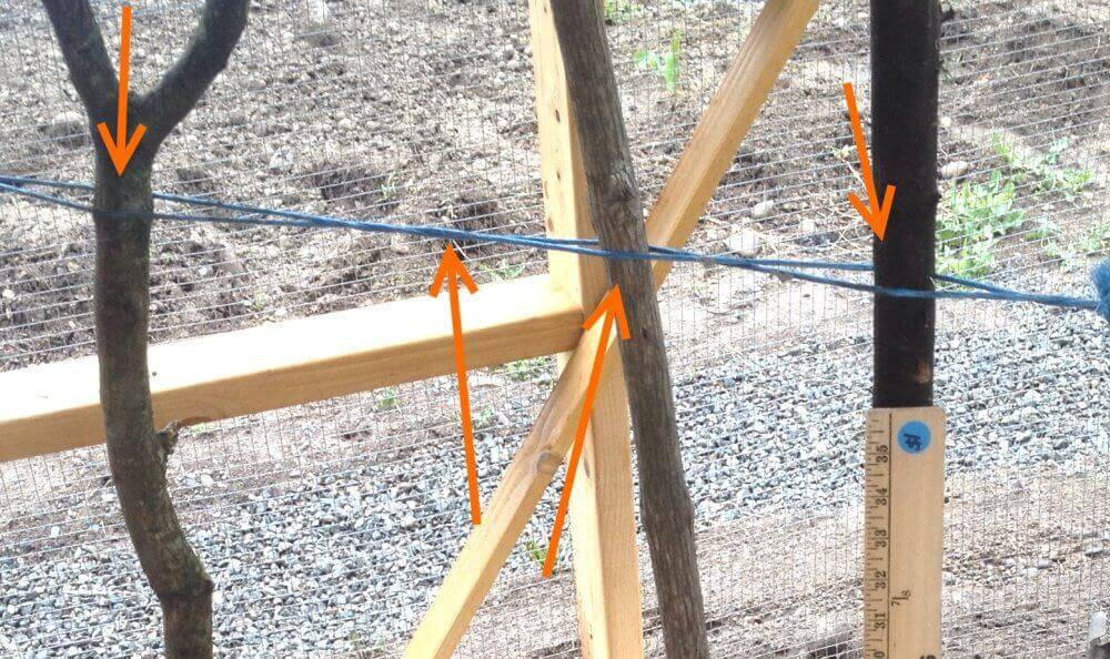 The string should be wrapped tightly between two points and twisted, so the branches can be held vertically in place while the concrete dries.