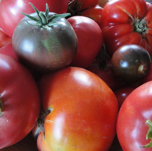 Heirlom Tomato harvest