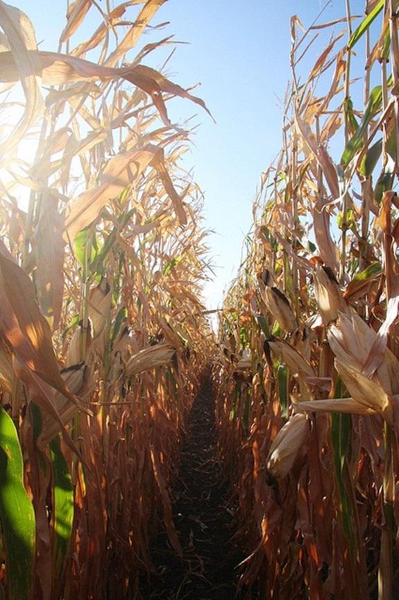 GMO Food Labeling - Prop 37