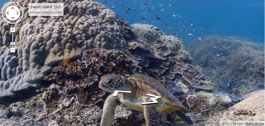 Google Reef Mapping Project