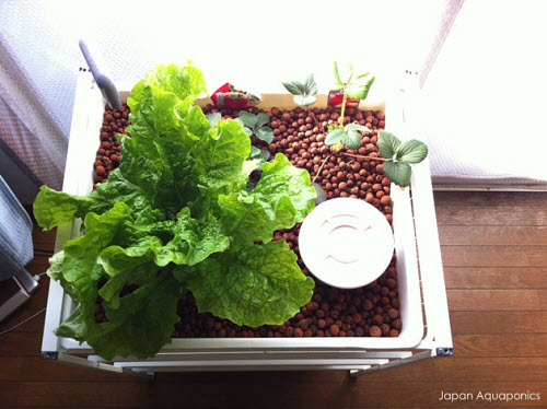 micro aquaponics system made from ikea frame and wire baskets
