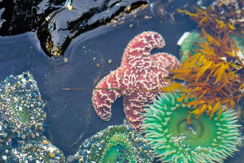 Sea Creatures in British Columbia