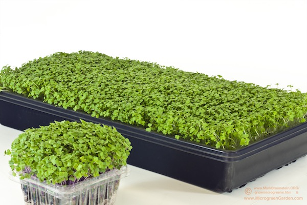 Homegrown Microgreens