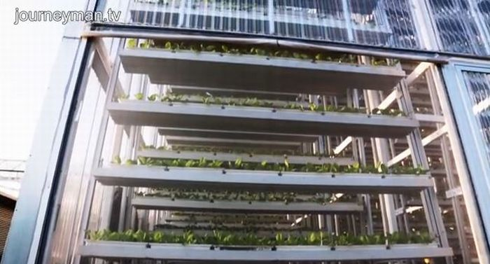 SkyGreens - Vertical Farming in Singapore