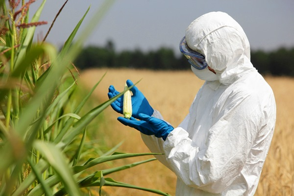 Biohazard-suited-person holding ear of corn