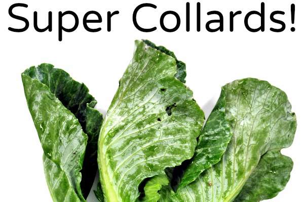 Collard Greens: Another Surprising Superfood (+ 6 recipes!)