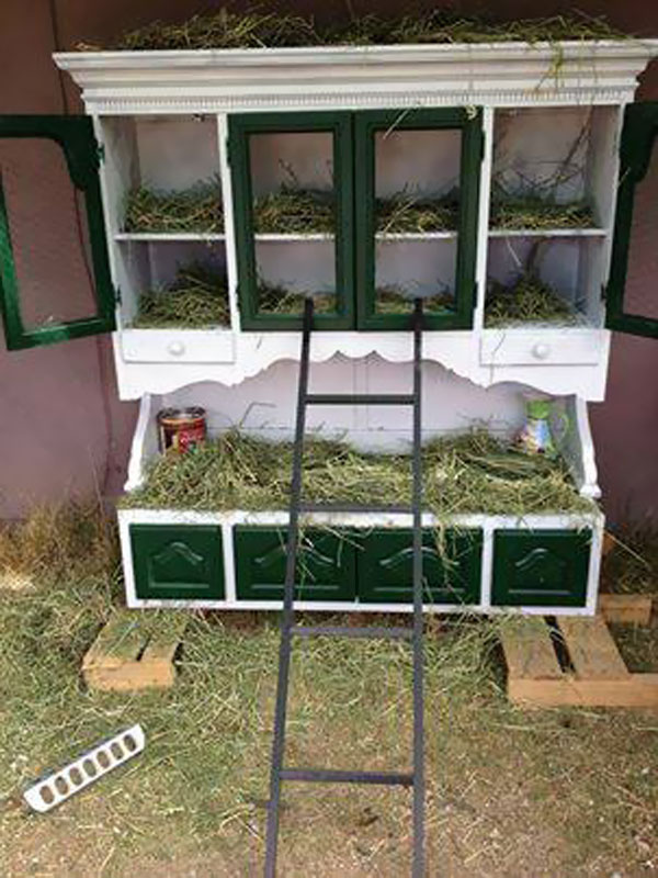 Turn an old china cabinet into a chicken coop.