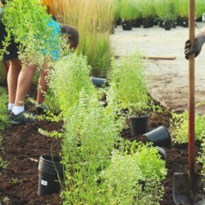 gardening shovels