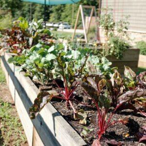 ubran garden