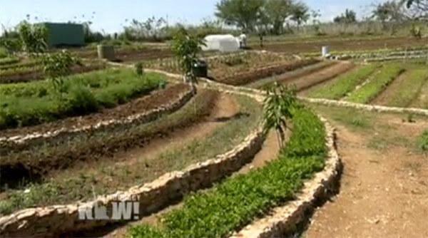 cuba organic farming