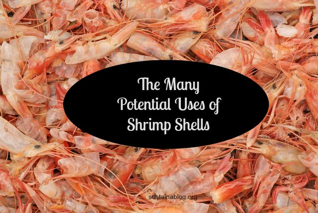Extracting Chemicals From Shrimp Shells