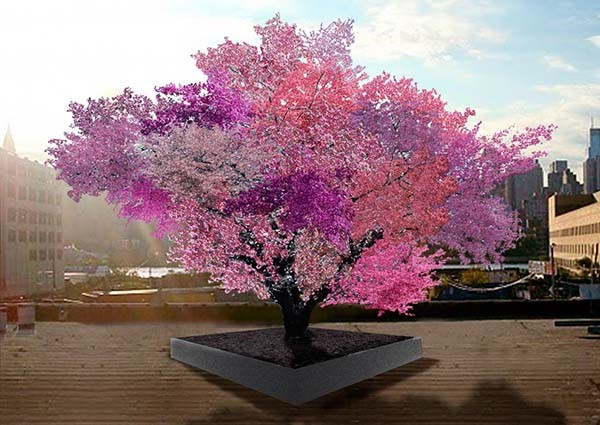 Artist Sam Van Aken uses grafting techniques to create his Tree of 40 Fruit. It's a stone fruit tree that produces different fruits all summer.
