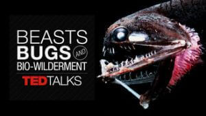 beasts-bugs-and-biowilderment-documentary
