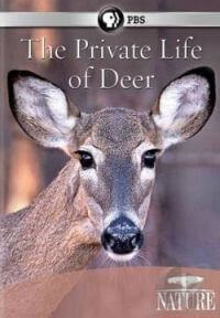 the-private-life-of-deer--documentary