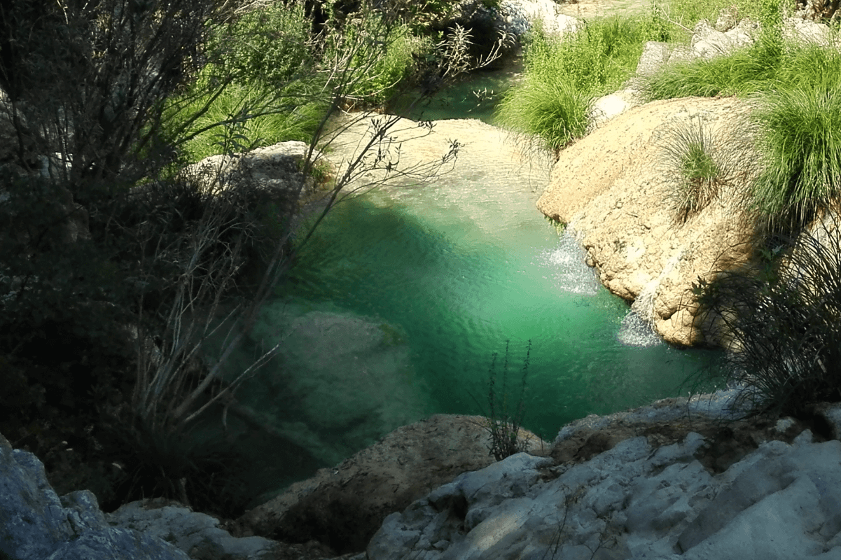 Stop Swimming In Chemicals: Build A Natural Pool