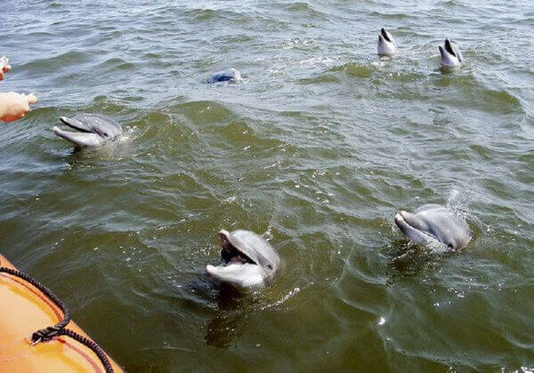 dolphins after Katrina