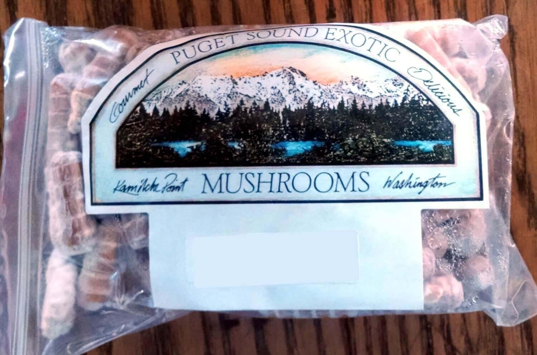 mycelium plug spawn