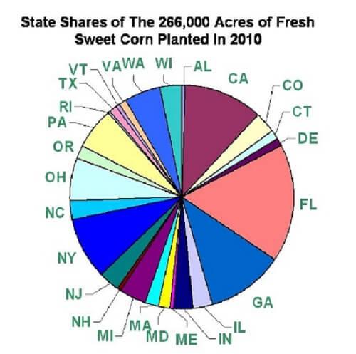 where sweet corn is grown