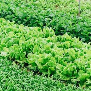 green garden beds
