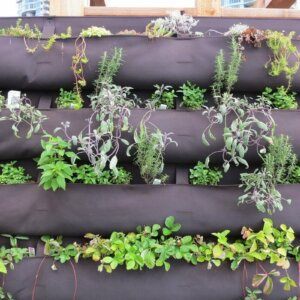 veritcal herb garden