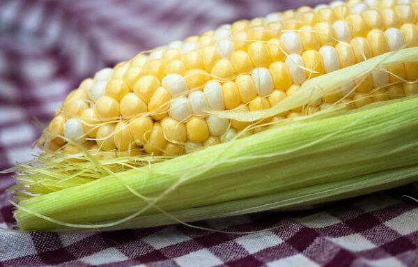 GMO-seeds-corn