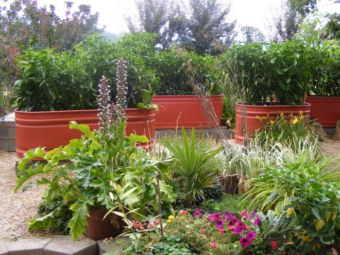 Painted Galvanized Water Troughs As Garden Beds