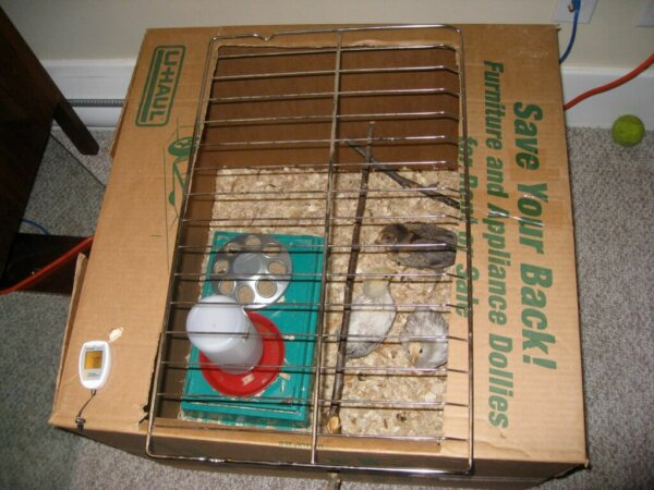 raising-baby-chicks-diy-brooder