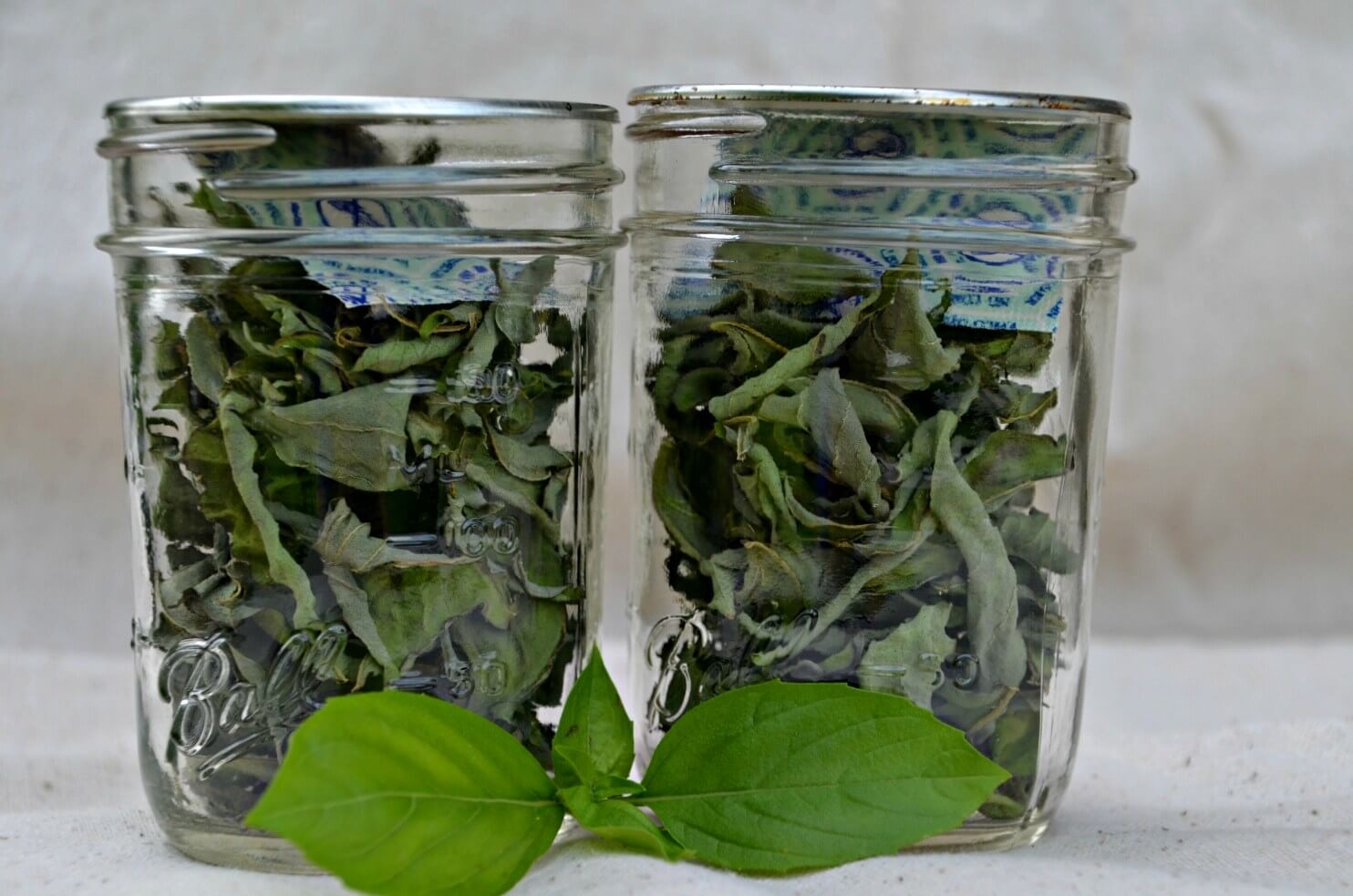 dehydrator recipes: dried basil in jars