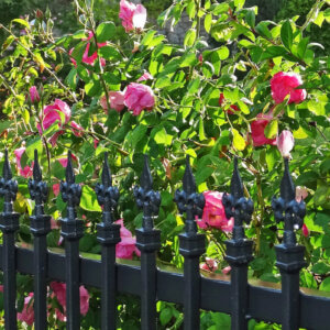 wrought iron fence and flowers